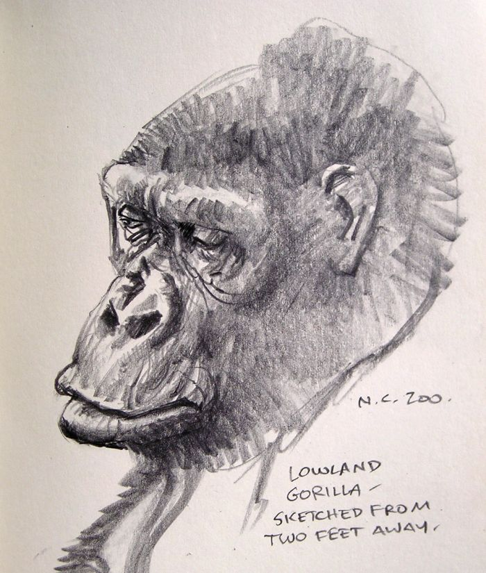 Ape Portraits (5 pics)