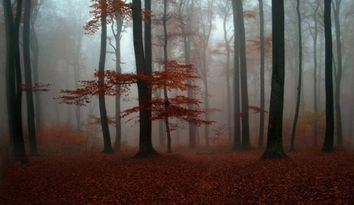 Beautiful Forests (22 pics)