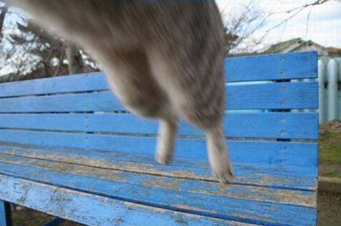 When Cats Attack (3 pics)