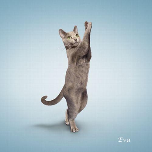 Yoga Cats 2010 (14 pics)