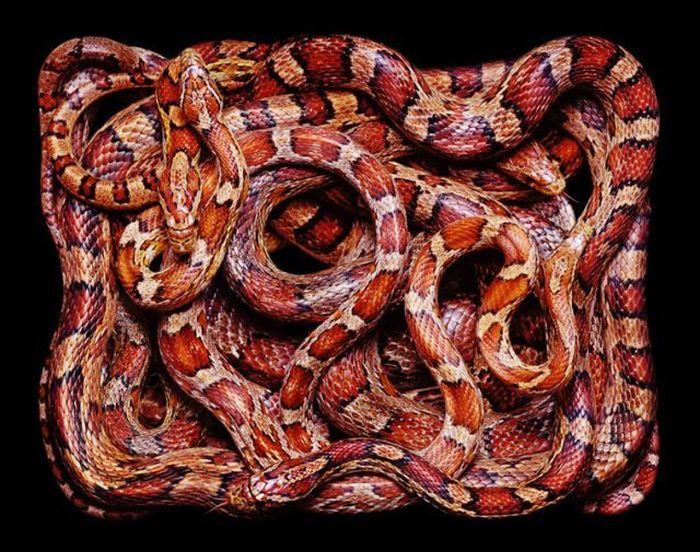 Snake Art (26 pics)