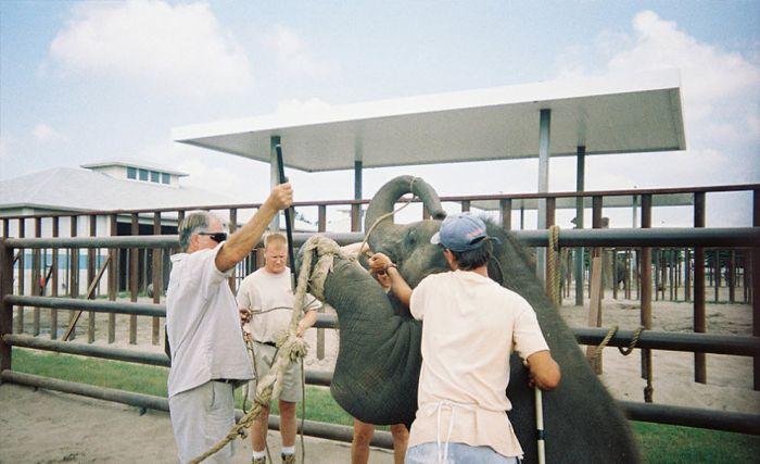 Baby Elephant Trainings in Circus (24 pics)