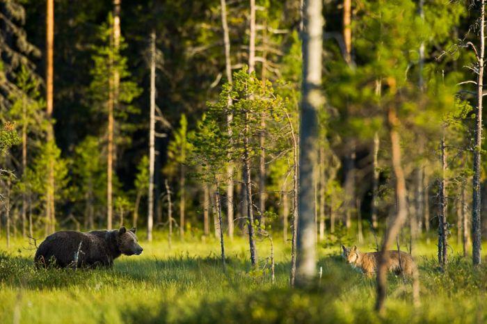 Life of a Bear Family (20 pics)