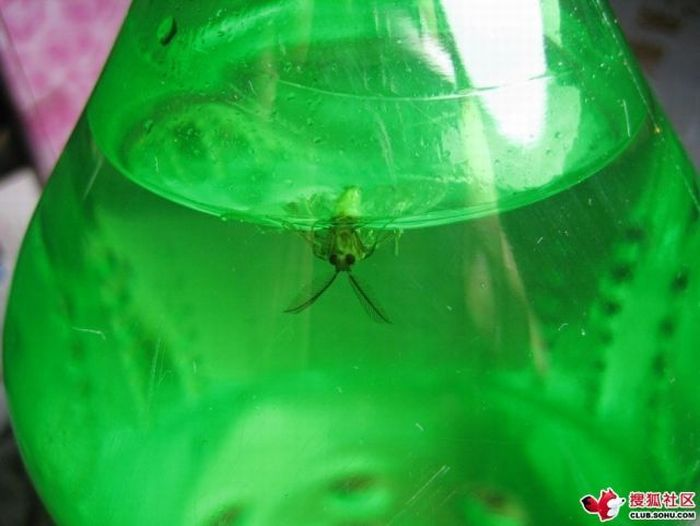 What Can Be Found Inside a Sprite Bottle in China (8 pics)