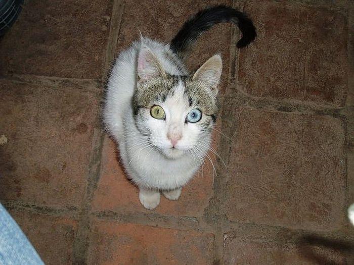 Heterochromia in Animals (12 pics)
