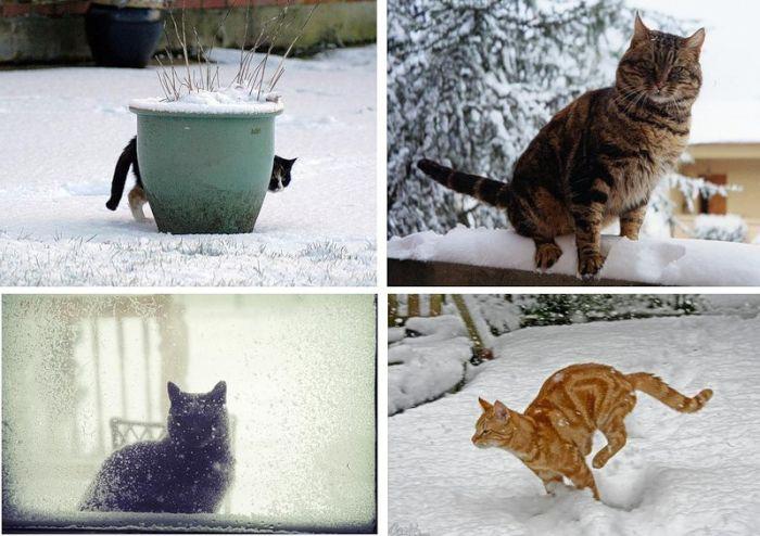 Snow Cats (21 pics)