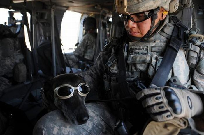 Military dogs (21 pics)