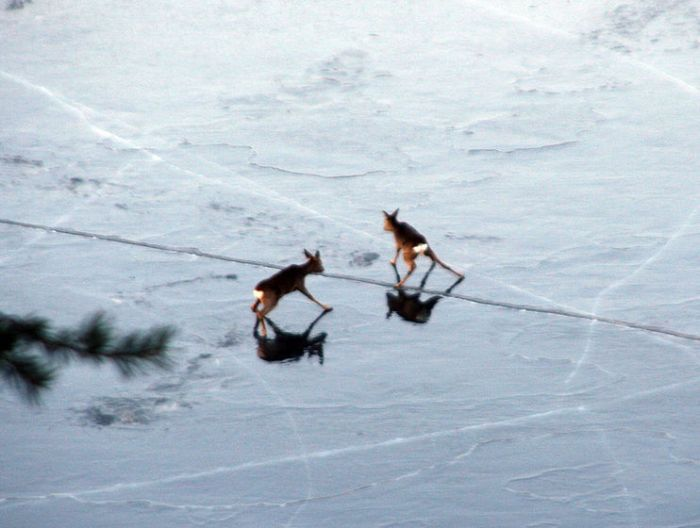Bambi is in danger (10 pics)