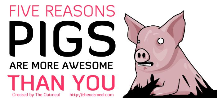 Five reasons pigs are more awesome than you (6 pics)