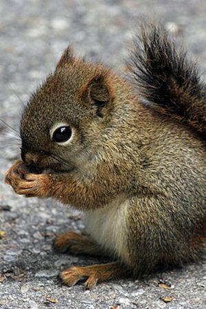 Little animals (70 pics)