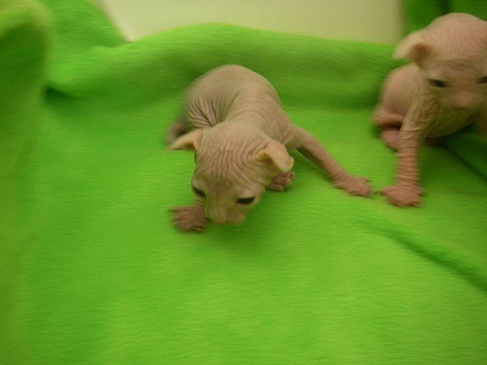 Naked Kittens 20 Pics-5838