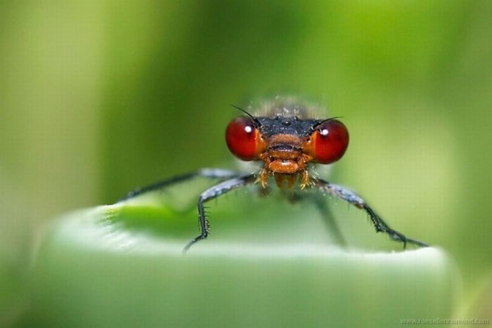 Photos of Insects by Roeselien Raimond (62 pics)