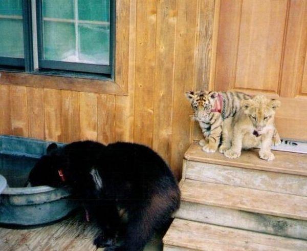 Unusual Friendship (17 pics)