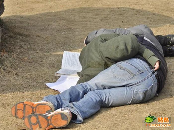 They have Studied Too Much (7 pics)