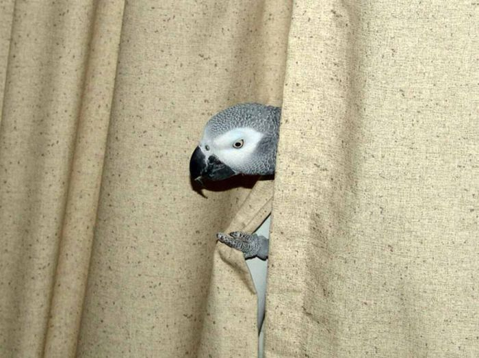 The Art of Hiding (21 pics)