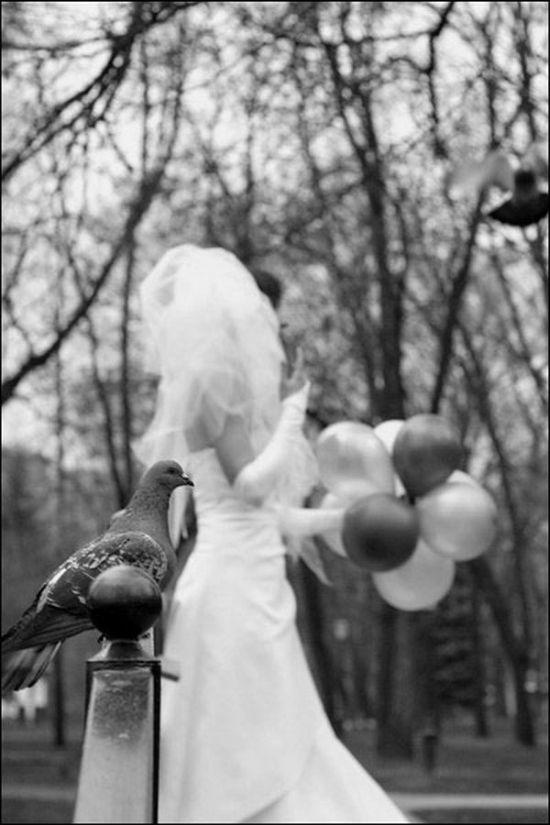 Funny Wedding Photos (18 pics)