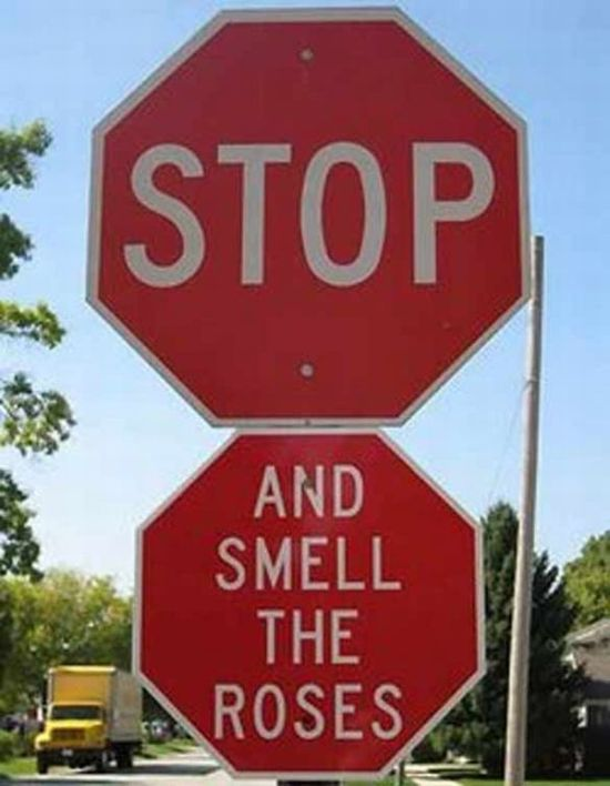 Fun with the Stop Signs (15 pics)