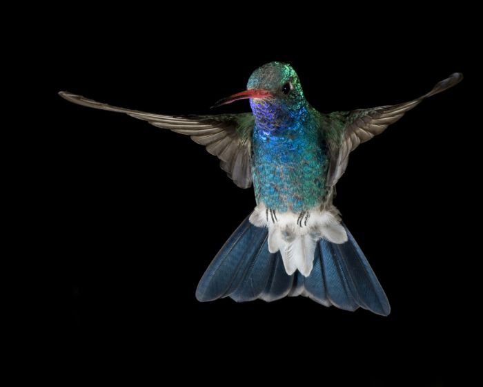 Beautiful High Speed Photography (102 pics)