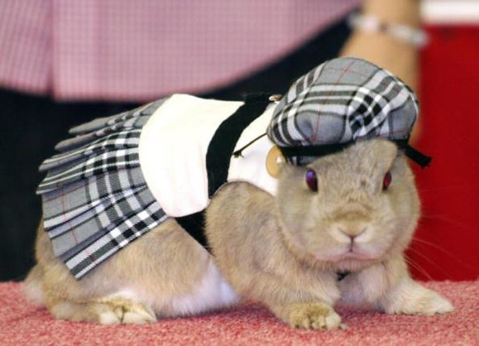 Rabbit Fashion (12 pics)