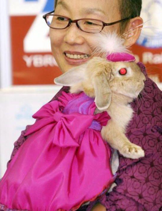 Rabbit Fashion (12 pics)