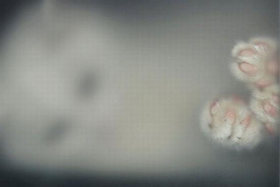 Acid Picdump (138 pics)