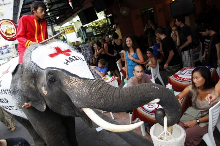 Thai Elephants Help to Raise Money for Haiti (7 pics)