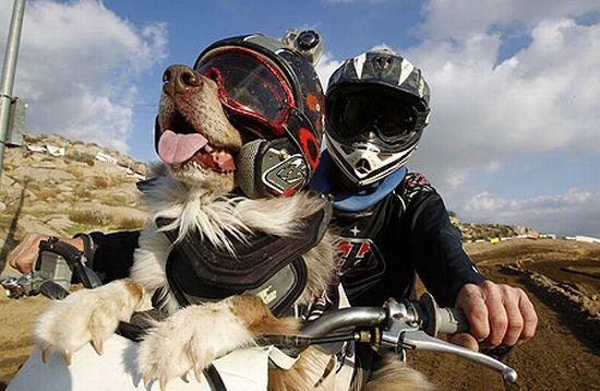 Perros en motos