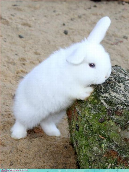 The Cuttest Animal Pictures Ever (97 pics)
