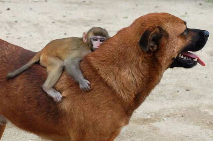 Unlikely Animal Friendships (50 pics)