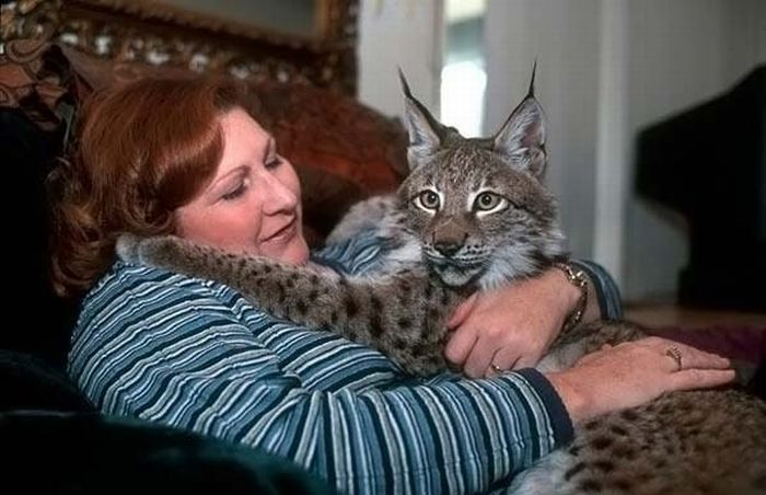 The Most Unusual Pets (17 pics)