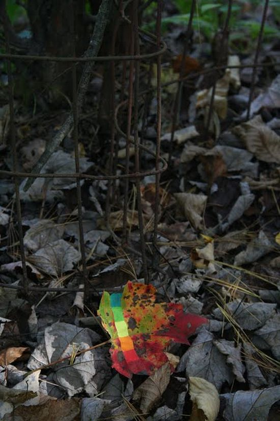 Decorating Nature (49 pics)