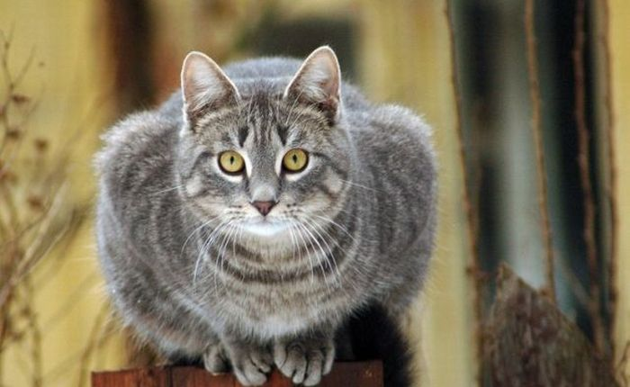 The Ultimate Cats Pics Collection (142 pics)