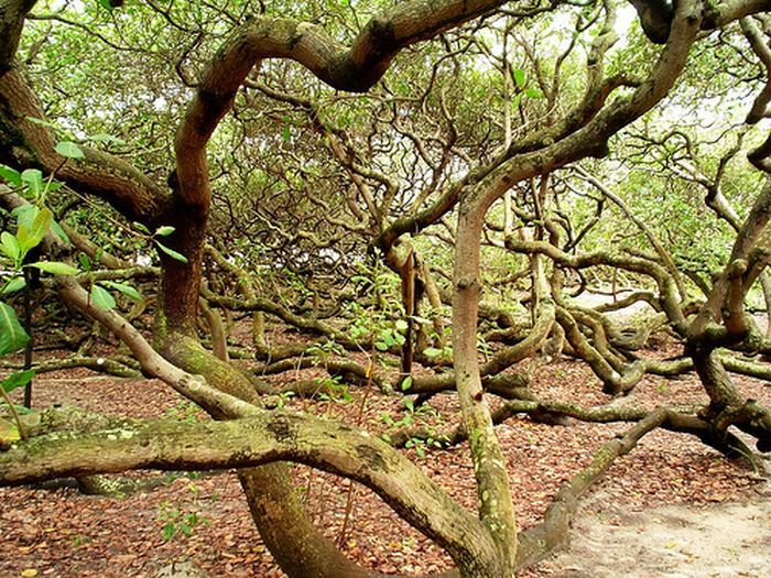 Strangest Trees on Earth (17 pics)