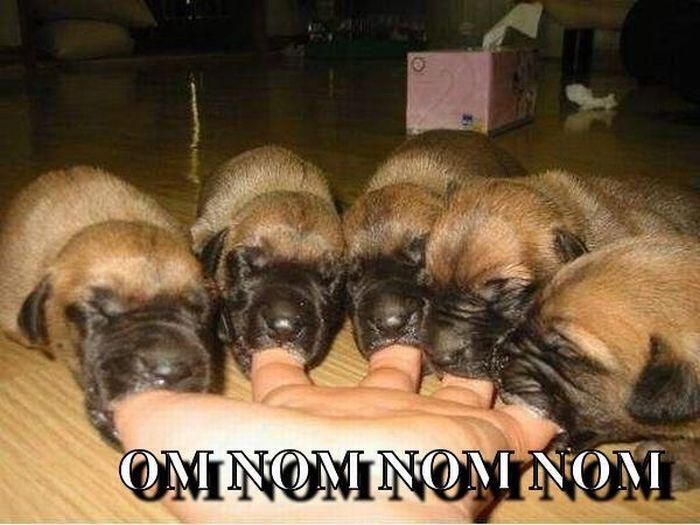 Funny Nom Nom Nom Animals (33 pics)