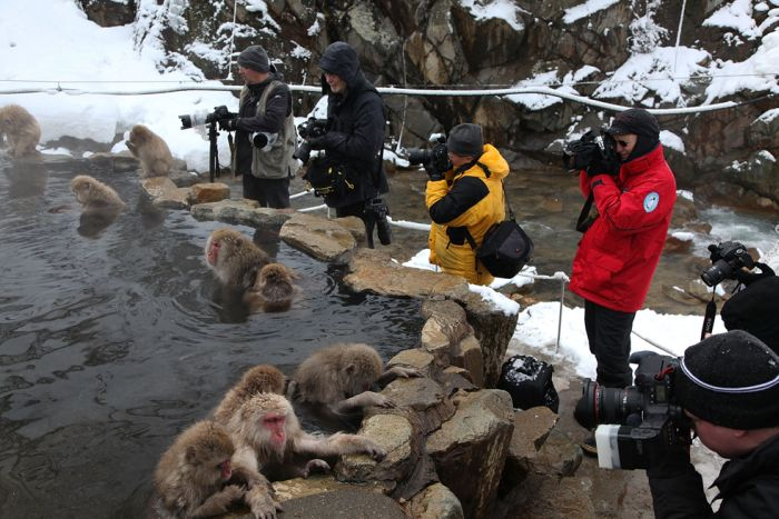 Monkey Park in Japan (19 pics)