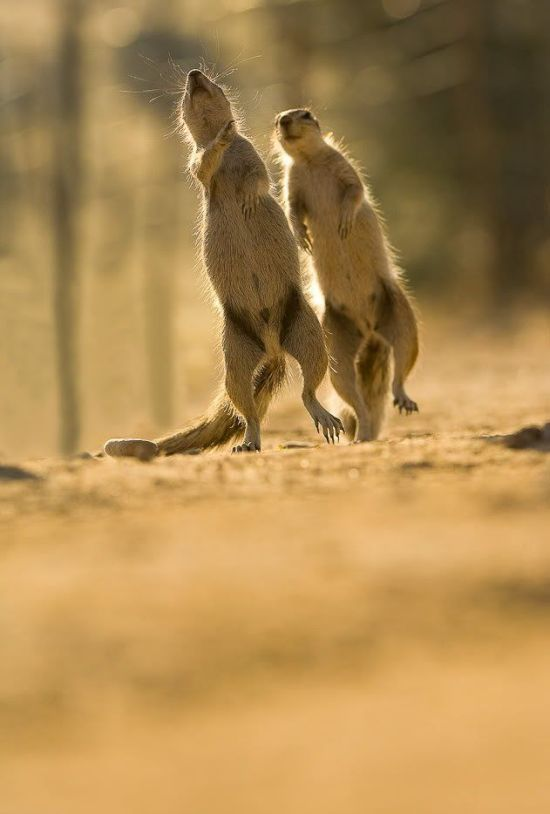 Cute Gophers (20 pics)