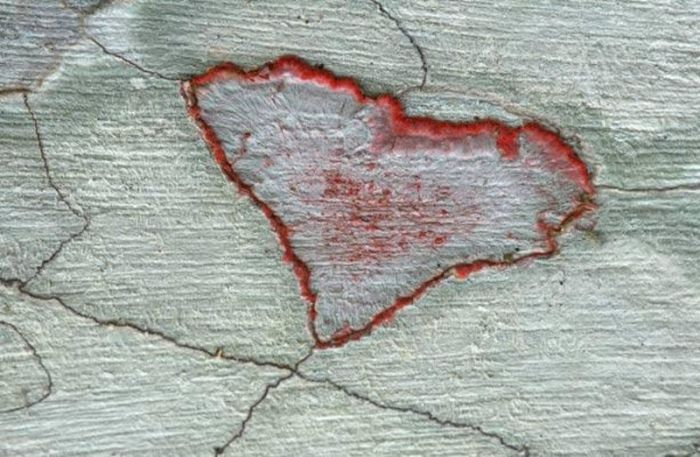 Hearts in Nature (11 pics)
