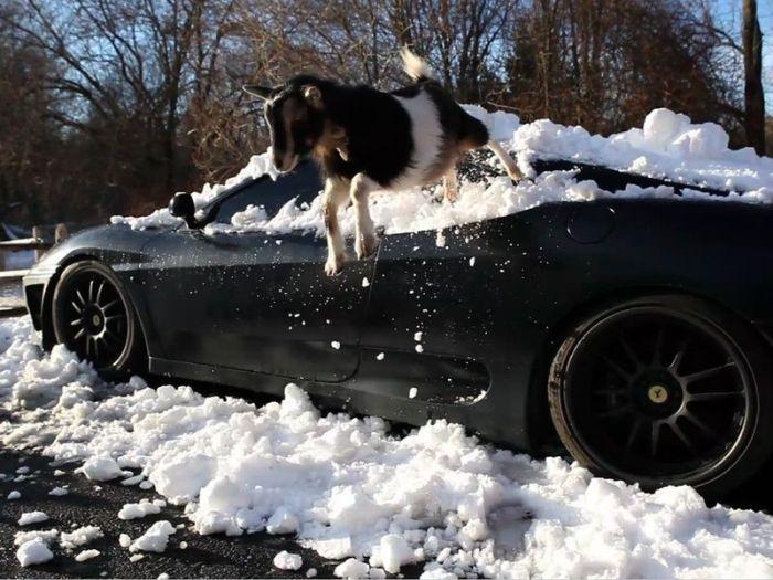 They Still Love to Walk on This Ferrari (3 pics)