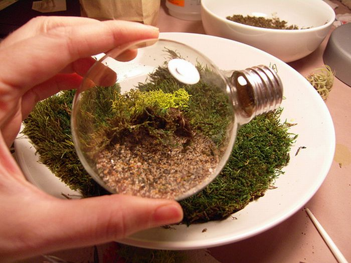 Tiny Terrarium in a Light Bulb (19 pics)