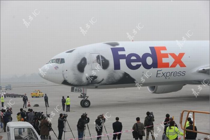 Giant Pandas and Their Own Airplane (30 pics)