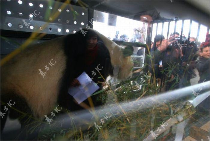 Giant Pandas and Their Own Airplane (30 pics)