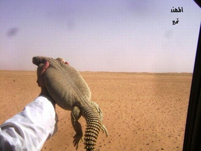 Lizard Hunt (29 pics)
