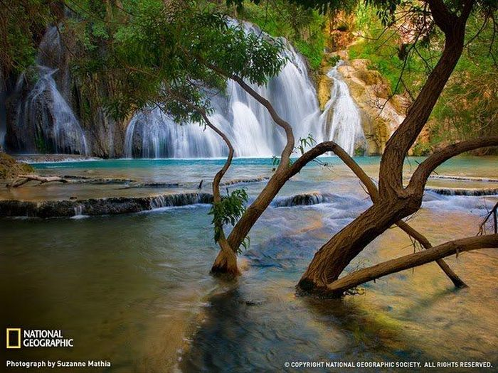 The Best Nature Pictures by National Geographic (40 pics)