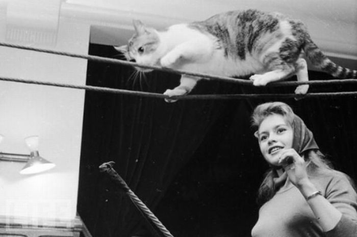 Famous People and Their Cats (67 pics)