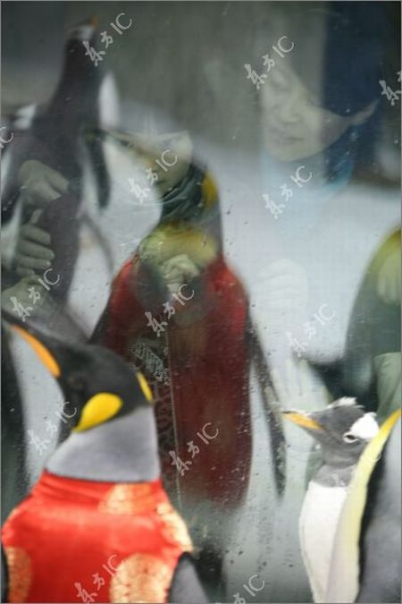 Traditionally-Dressed Penguins Celebrate Chinese New Year (8 pics)