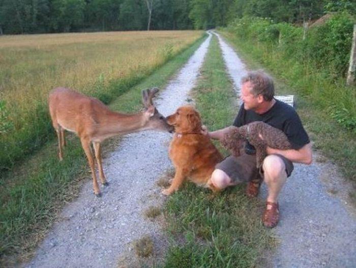 A Friendly Deer (7 pics)