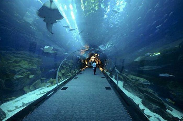 A Leak in a Giant Aquarium in Dubai (14 pics + 1 video)