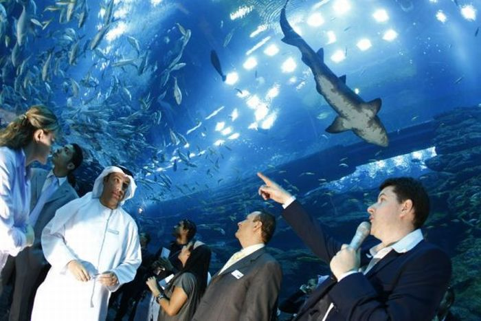 A Leak in a Giant Aquarium in Dubai (14 pics + 1 video)