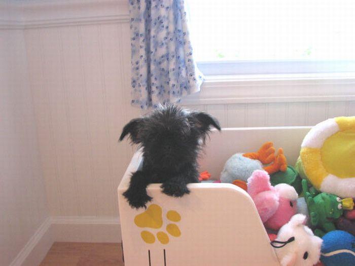 Luxury Dog Houses (29 pics)