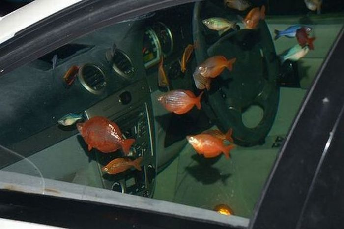 Car Aquarium (9 pics)